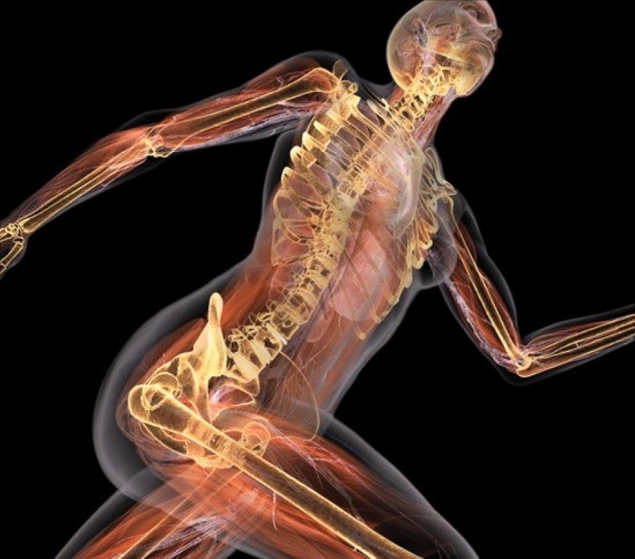 Костно суставная система лечениеопухших суставов