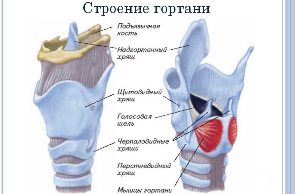 Перстнечерпаловидные суставы что такое переферические суставы